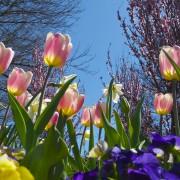 lente kleur