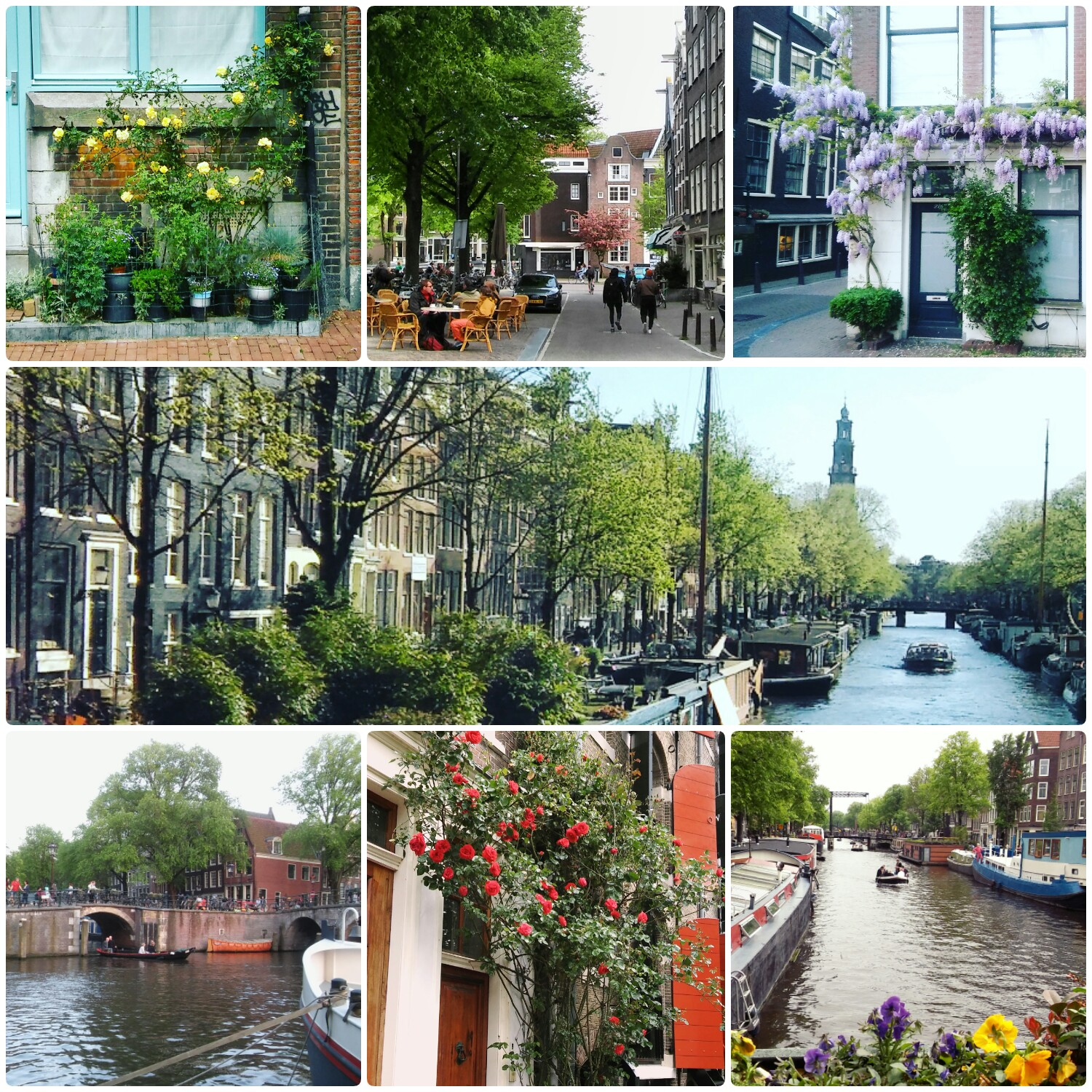my jordaan amsterdam special  fun facts and travel tips