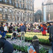 Amsterdam tulips 2