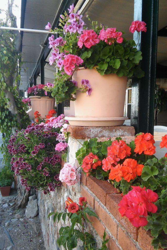 Taormina bloemen