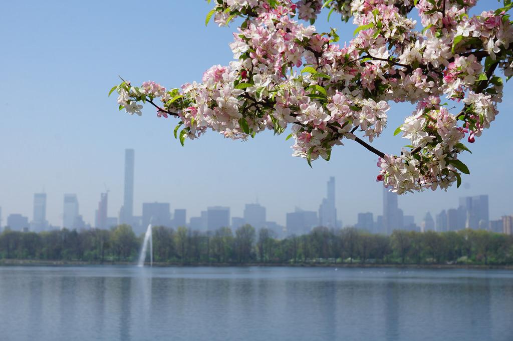 NYC Manhattan lente