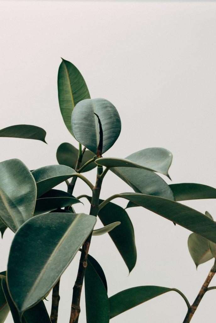 plant inspiratie