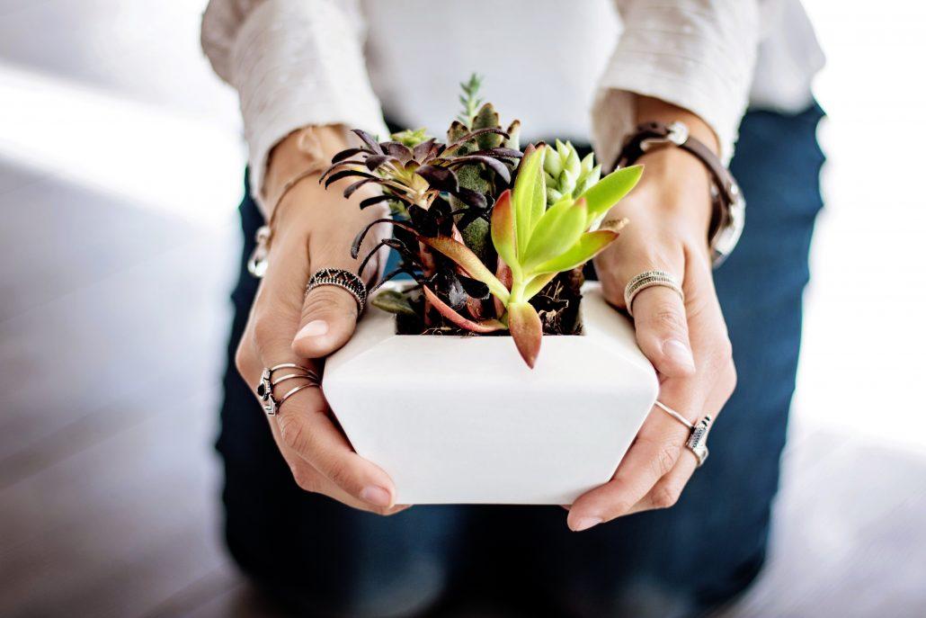 mini planten