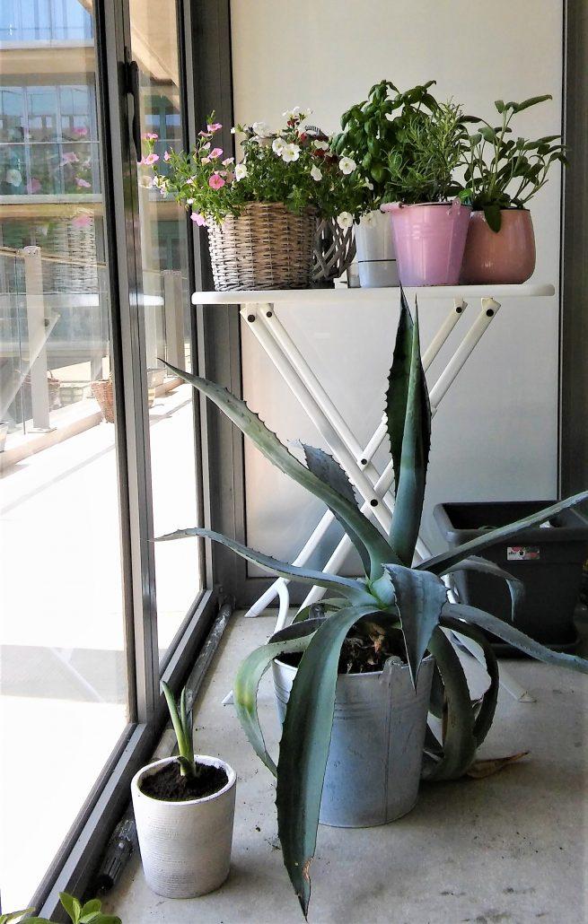 vetplant cactus