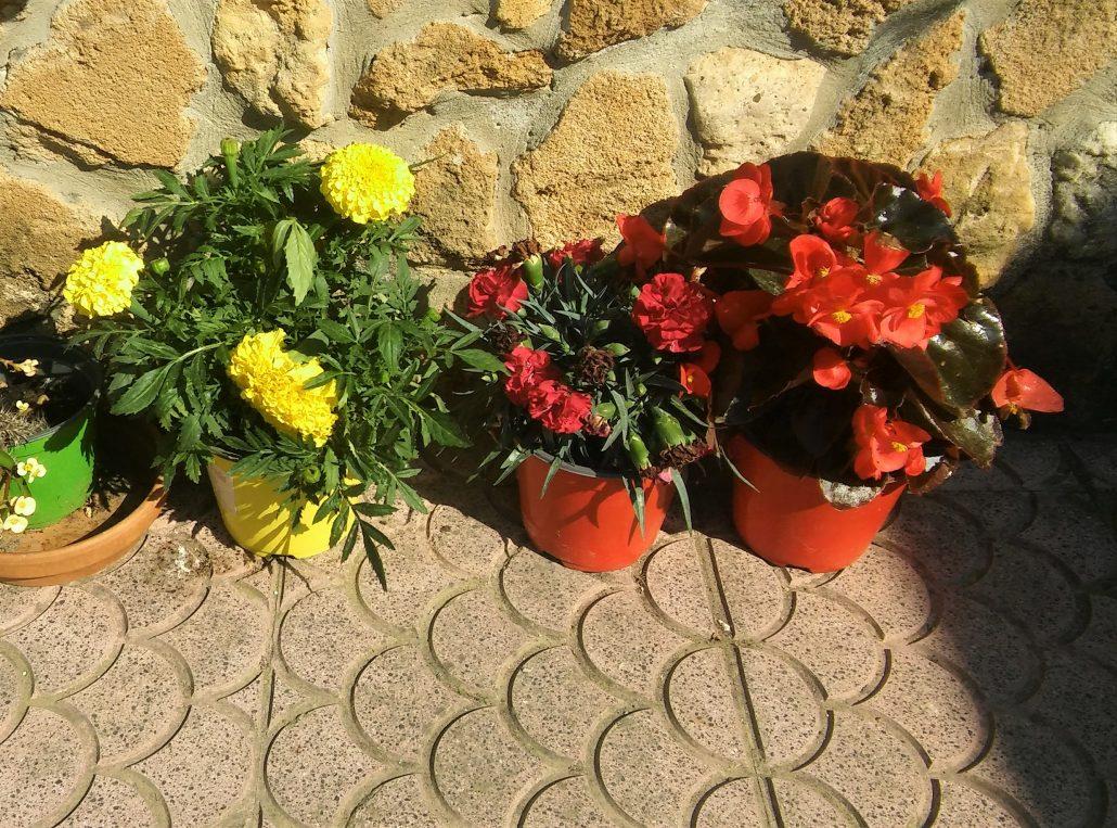 bloemen pot