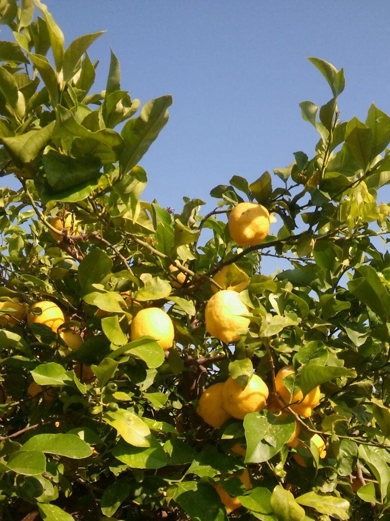 Sicilië citroenen