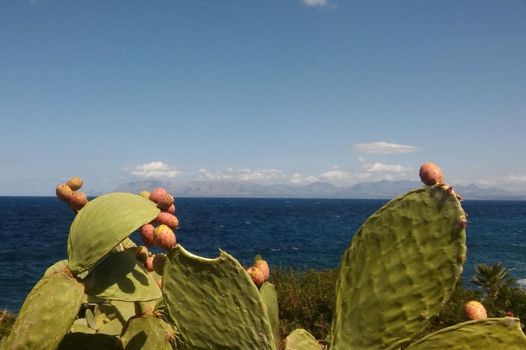 sicilie zomer cactusfruit
