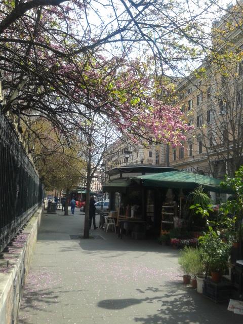 Rome lente