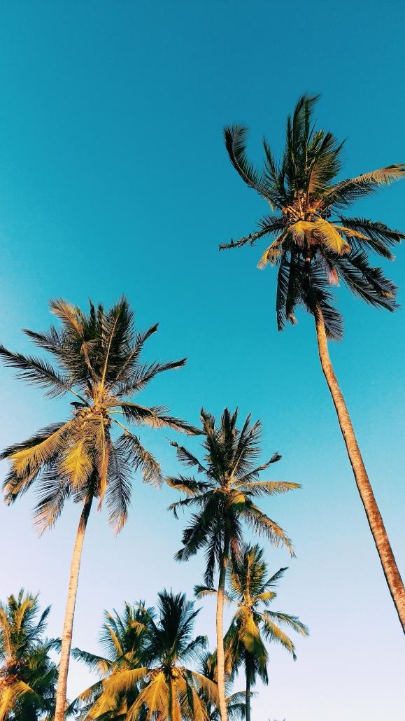 pinterest palmbomen