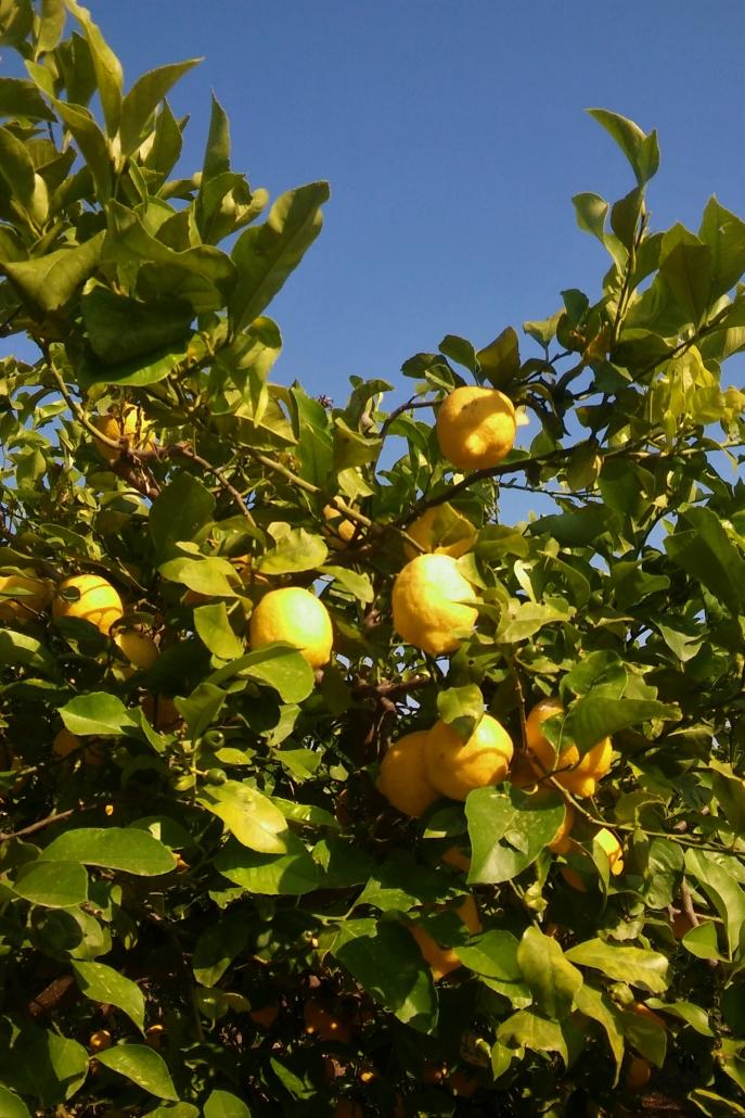 citroenen granita