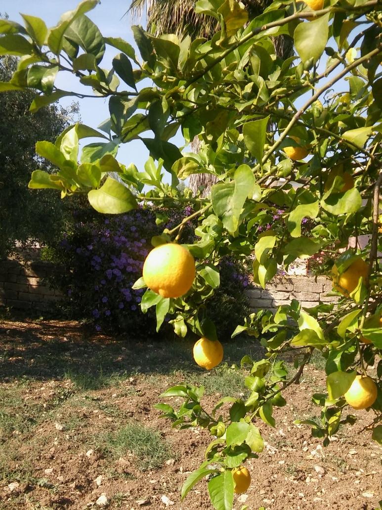 citroenen kleur sicilie