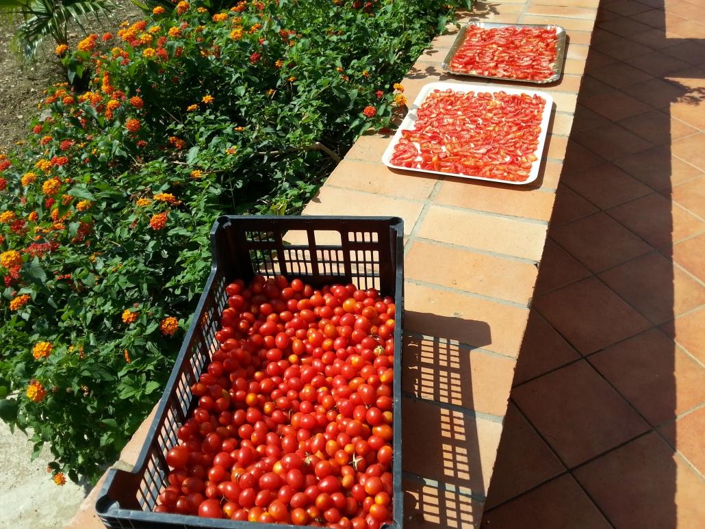 tomaten Sicilie
